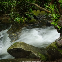Rhododendron, Rocks and Running Water
